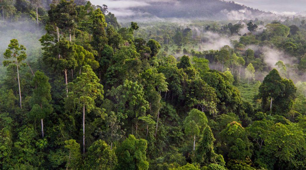Trópusi esőerdő
